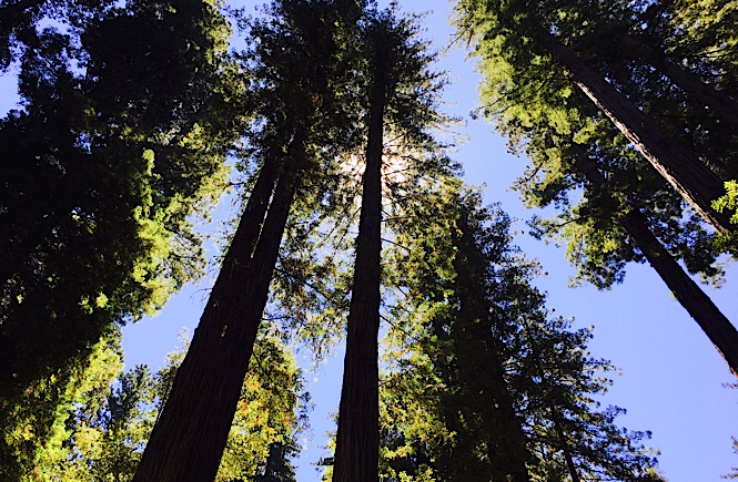 Best trips in California Big Basin Redwoods National Park