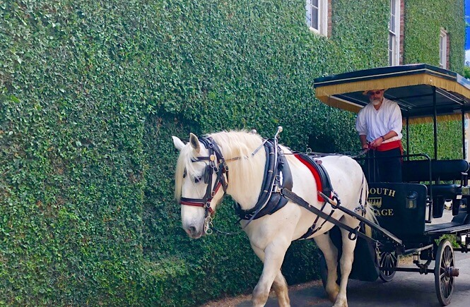 5 Fabulous Southeast USA Road Trip Ideas featured by top US family travel blog, More Than Main Street: Charleston Carriage Tour on our southern road trip!