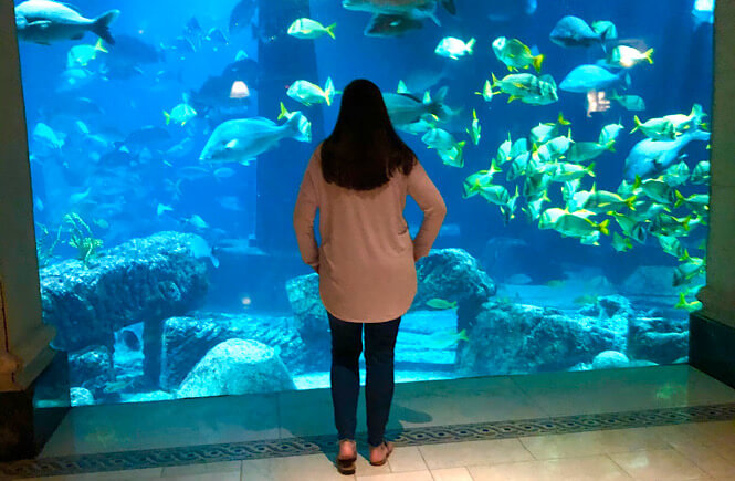 Bahamas Family Vacation: Top 10 Tips for Visiting Atlantis with Kids as featured by top US family travel blog More than Main Street: aquarium called the Dig.
