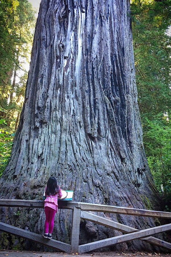 Top 15 best off the beaten path spring break destinations in the US for families featured by US family travel blog, More Than Main Street: Redwood National Park