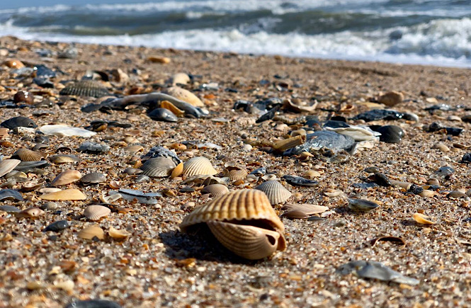 Amelia Island Florida one of the best beaches for shelling in the US.