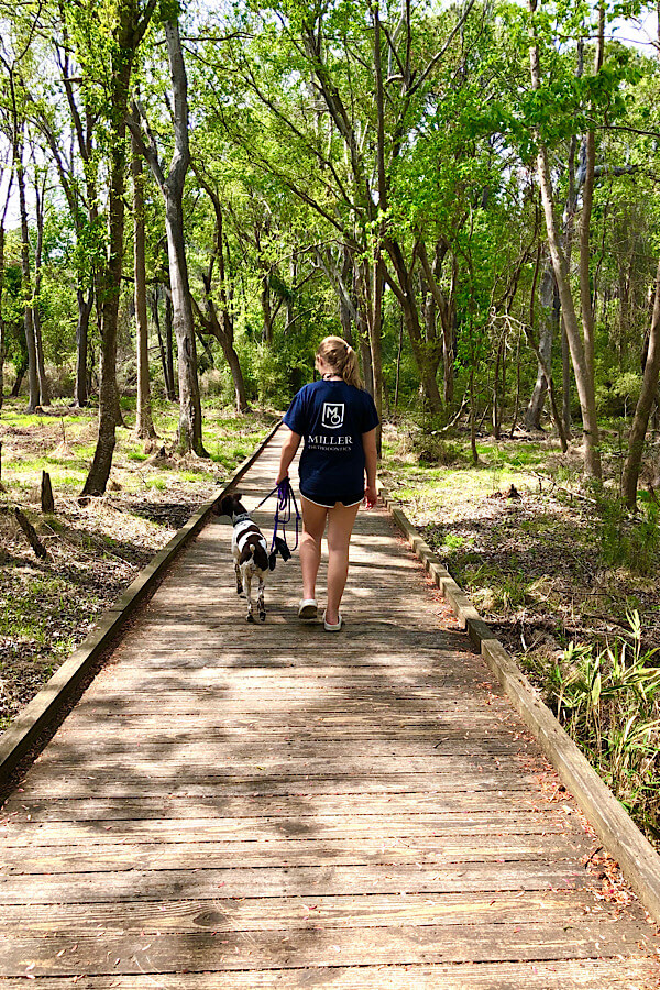 Top 10 best things to do in Carolina Beach and Kure Beach NC featured by top US travel blog, More than Main Street: hiking in Carolina Beach State Park.