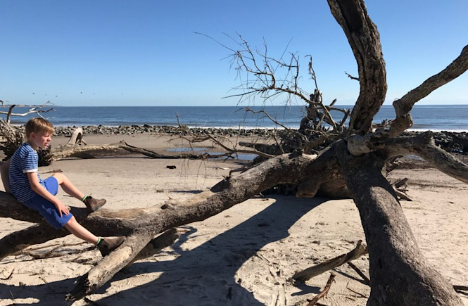 A driftwood beach in Georgia is a great USA road trip featured by top US family travel blog More than Main Street.